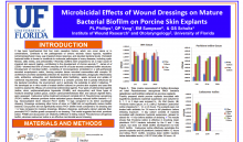 Microbicidal Effects of Wound Dressings on Mature Bacterial Biofilm on Porcine Skin Explants Photo